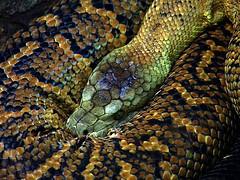 Запуск python-скрипта из Sublime Text 2